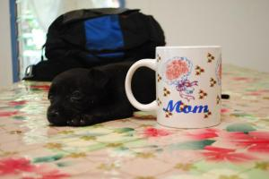 Laikiki Coffee Cup.jpg