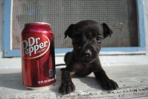 Laikiki Dr.Pepper