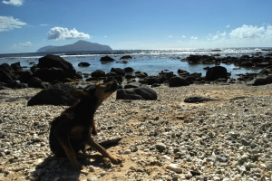 Lolo scratches her fleas at To'a Cove