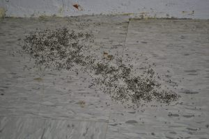 Just a normal, everyday ant pile in the hallway.